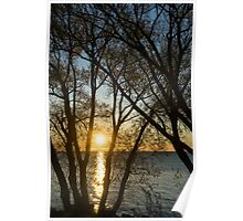 Golden Willow Sunrise Poster