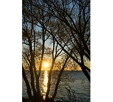 Golden Willow Sunrise Photographic Print