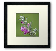 Texas Sage Framed Print