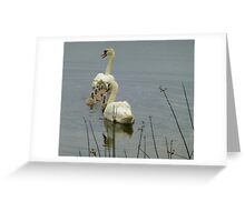 Swans And Cygnets Greeting Card