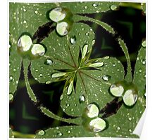 Oxalis Leaf Abstract Poster