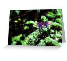 Butterfly & Branch Greeting Card