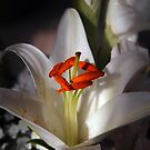 lily in light and shadows by Linda  Makiej