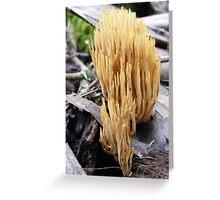 Coral Fungi Greeting Card