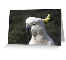 Hello Cocky. Sulphur-crested Cockatoo - Cacatua galerita Greeting Card