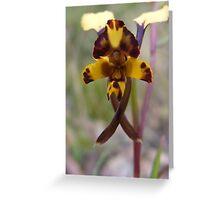 Leopard Orchid - Diuris pardina  Greeting Card