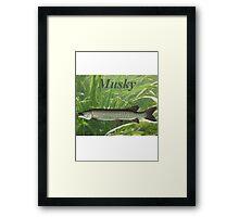 Musky Framed Print
