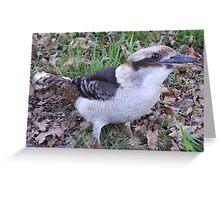 Got anything for Kooka? Laughing Kookaburra - Dacelo novaeguineae Greeting Card