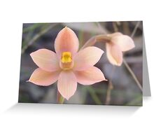 Fishy orchid. Salmon Sun Orchid - Thelymitra rubra Greeting Card