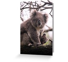 Koala Baby Greeting Card