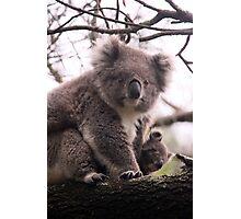 Koala Baby Photographic Print