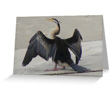 Hanging out to dry. Darter - Anhinga melanogaster Greeting Card