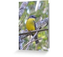 Dropping in for lunch. Eastern Yellow Robin - Eopsaltria australis Greeting Card