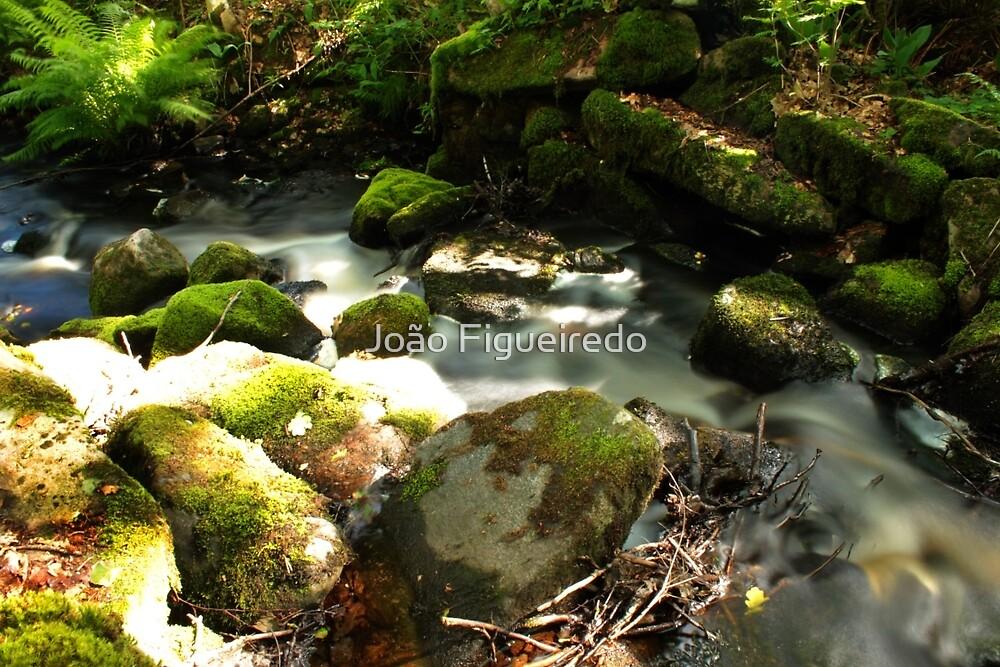 The unidentified stream in Hillerstorp IV by João Figueiredo