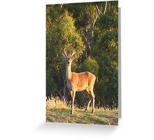 Dear Deer. Red Deer - Cervus elaphus Greeting Card