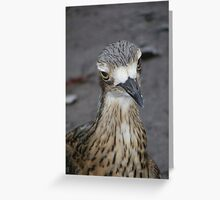 What are you looking at? Bush Thick-knee - Burhinus magnirostris Greeting Card