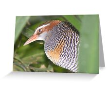 Have they gone yet? Buff-banded Rail - Gallirallus philippensis Greeting Card