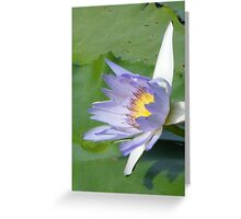 Mauve waterlilly Greeting Card