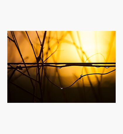 Sunset on a Wire Photographic Print