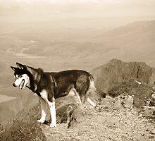 Rockhound by Graham Povey