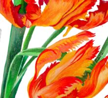 Parrot Tulips Sticker