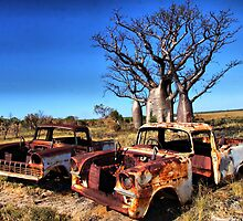 Boab Trees by riverboy