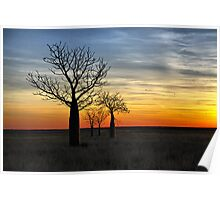 Boabs at Sunset Poster