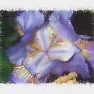 Iris Barrels by jeffrey freeman