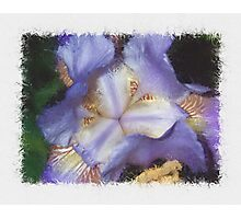 Iris Barrels Photographic Print