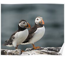 Puffin Duo  Poster