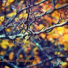 Autumn Point by Zoe Harris
