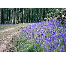The Bluebell Track Photographic Print