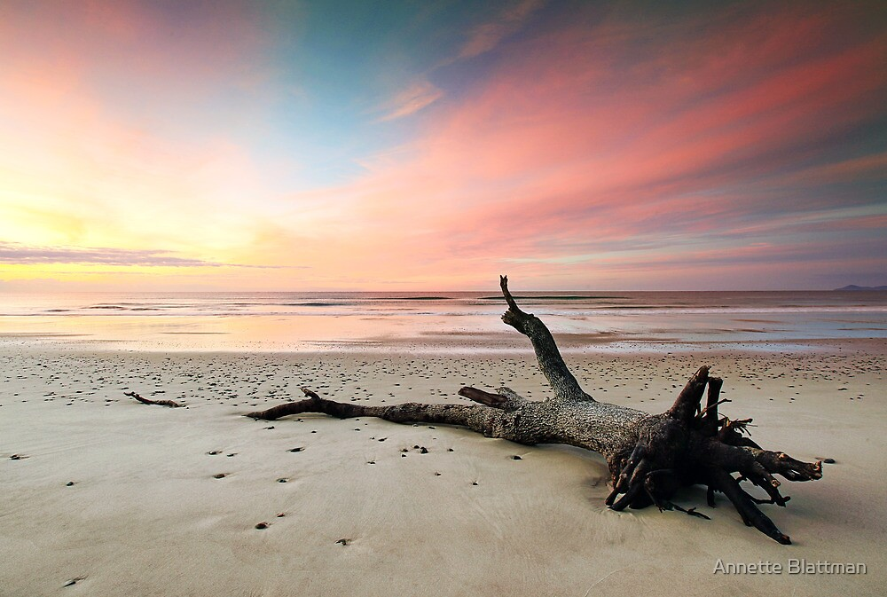 Fallen Tree Beach by Annette Blattman