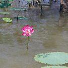 Water Lily by georgieboy98