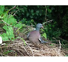 Pigeon Roost Photographic Print