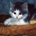 Kitten in Slipper by sally-w