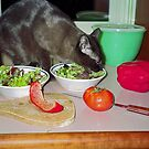 Tonkinese Cat Eating Salad by sally-w