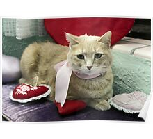 Valentine Cat  Poster