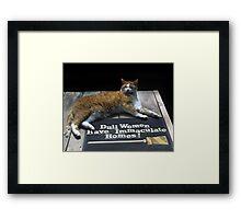 Cat on Dull Women Mat Framed Print