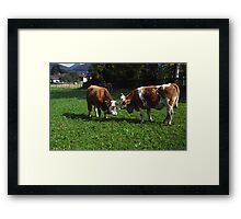 Cows Nuzzling Framed Print