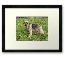 Furry Dog Among Wildflowers Framed Print
