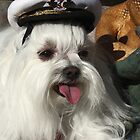 Maltese Captain by sally-w