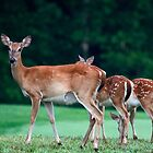 Deer Family by sally-w