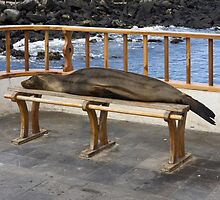 Sleeping Sea Lion by sally-w