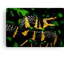 Gold ringed Mangrove snake (Boiga dendrophila) Canvas Print