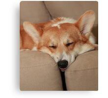 Pooped Pup ~ Canvas Print