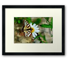 Resting on a Hot Day Framed Print