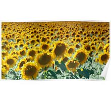 Surreal Sunflowers Poster