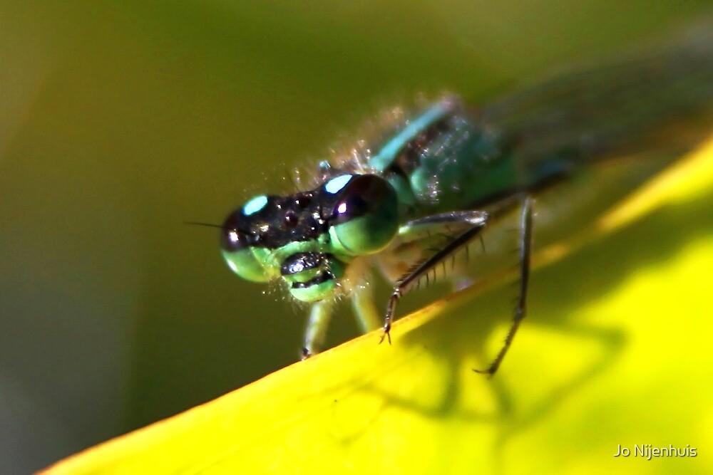 Up-close - Blue-tailed Damselfly by Jo Nijenhuis