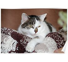 Milli - Resting Poster